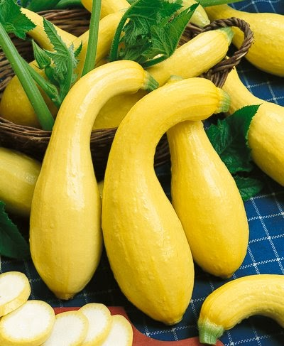 Courgette Yellow Crookneck