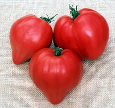 Tomate Oxheart